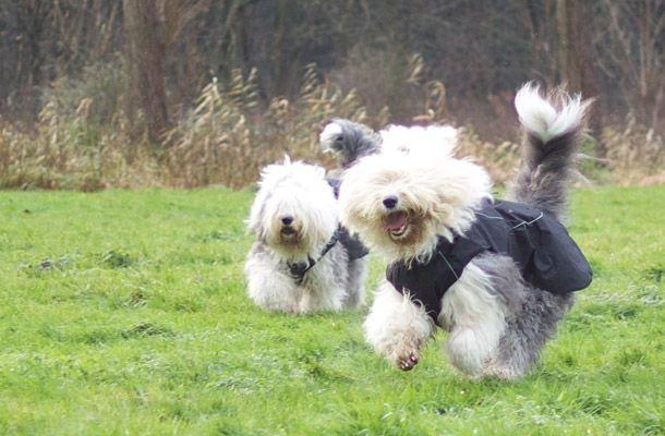 Kynocoat Honden Regenjas Zwart