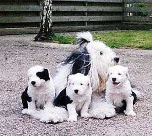 Ryco samen met moeder Macy en zusjes Shannon en Indra