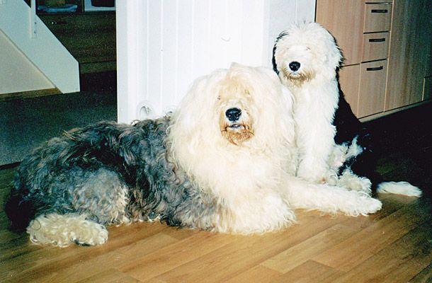 Booby en Ozzy