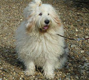Tarkan, een heel bijzondere hond