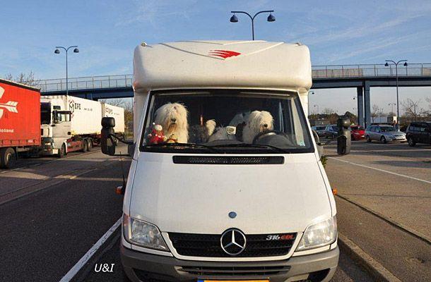Honden in de camper