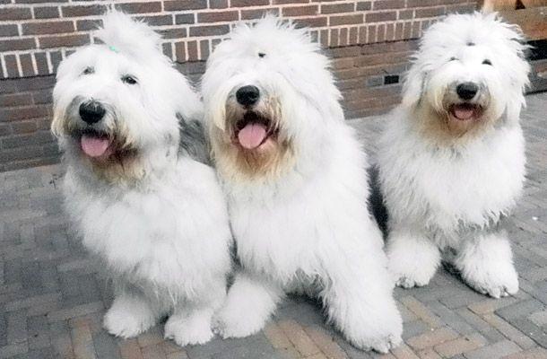 Dit zijn nu onze 3 kanjers Lobke, Kay en Babs